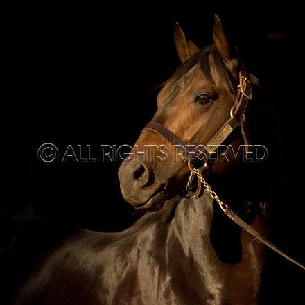 Newgate Stallions, Dissident_12-04-16_0089