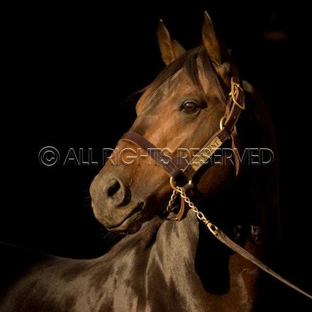 Newgate Stallions, Dissident_12-04-16_0090
