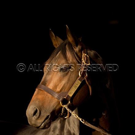Newgate Stallions, Dissident_12-04-16_0092