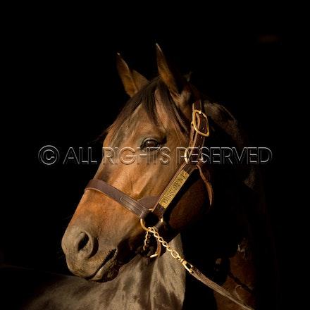 Newgate Stallions, Dissident_12-04-16_0093