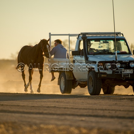 Birdsville, Trackwork, Utes, Ryan Dawson, Eye The World_28-08-17, Sharon Lee Chapman_0007