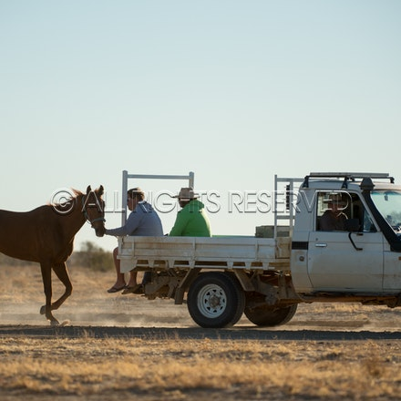 Birdsville, Trackwork, Utes, Ryan Dawson, Impossible Girl_28-08-17, Sharon Lee Chapman_0018