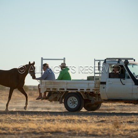 Birdsville, Trackwork, Utes, Ryan Dawson, Impossible Girl_28-08-17, Sharon Lee Chapman_0019
