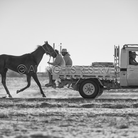 Birdsville, Trackwork, Utes, Ryan Dawson, Impossible Girl_28-08-17, Sharon Lee Chapman_0024