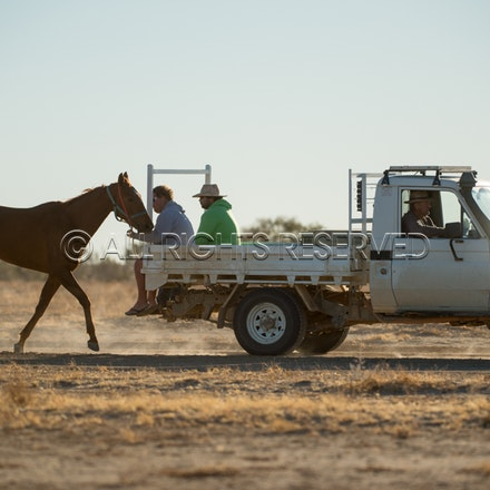 Birdsville, Trackwork, Utes, Ryan Dawson, Impossible Girl_28-08-17, Sharon Lee Chapman_0022