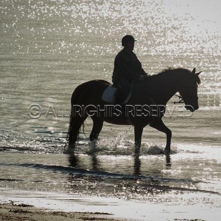 Balnarring Beach, General_29-11-16, Sharon Chapman_0127