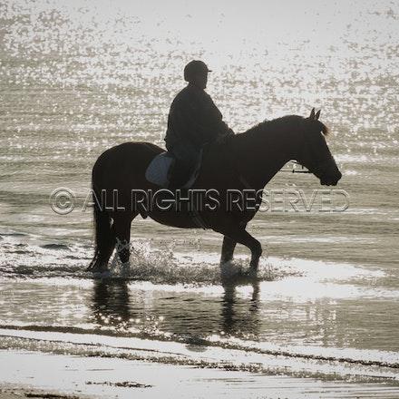 Balnarring Beach, General_29-11-16, Sharon Chapman_0128