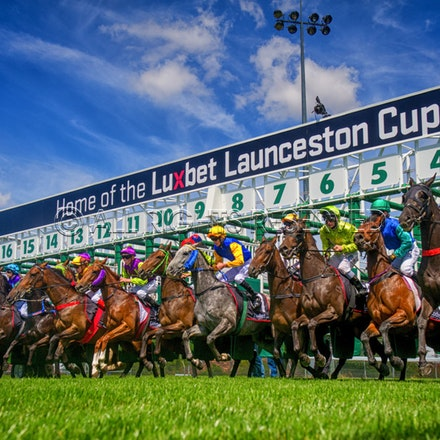 Race 1, Starting Gate_22-02-17, Launceston, Sharon Lee Chapman_0112