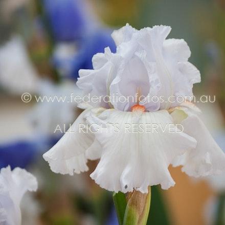 Iris ♥ | 2012