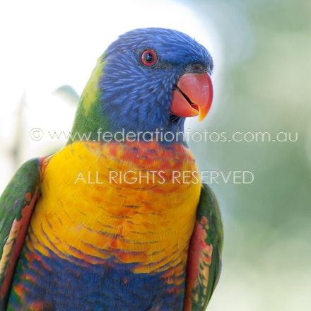 Bird ♥ | Jan 2012