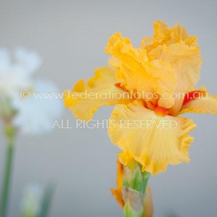 Flower ♥ | 2011