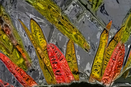 Glass Crotoun