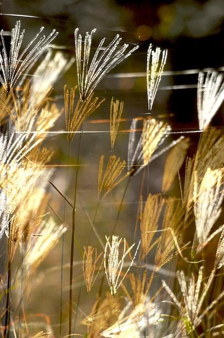 grass &web