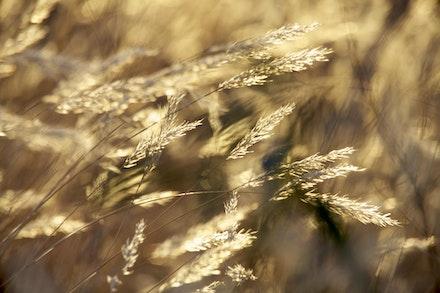 Grass_0776