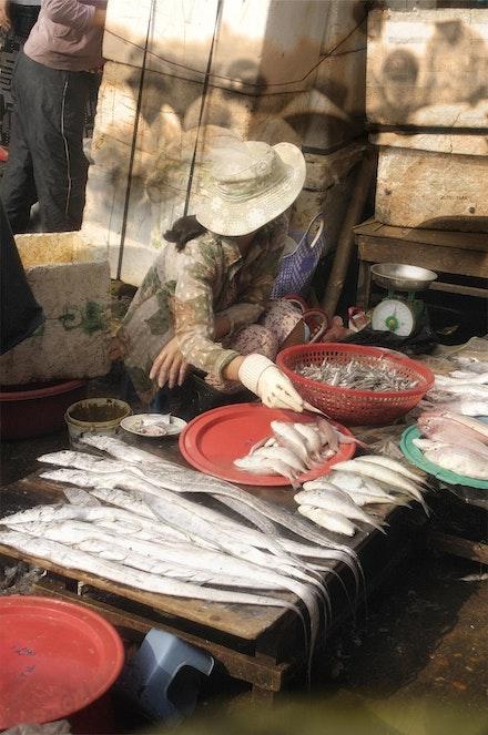 hoi ann fish market