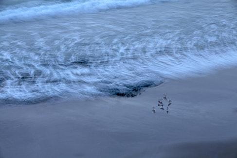 Gulls_5751