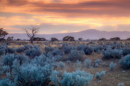 Salt Bush Dawn_7085