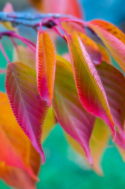 Autumn Pastels