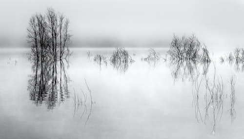 Eildon morning mono - Salon Gold, Pannonia (France) 2014