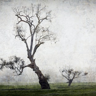 Resilience. Tree folio - Celebrating the resilience of rural trees, mainly from the area around Marysville, Victoria! Many images were taken at night,...