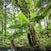 Taggerty river fern