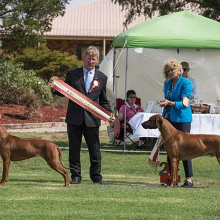 RRCV Show 2018 - Rhodesian Ridgeback club of Vic Champ show 17 March 2018