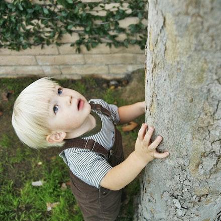 coltontree