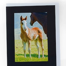 Handmade Cards - A variety of handmade greeting cards including hand painted embellishments, & handmade craft embellishments.