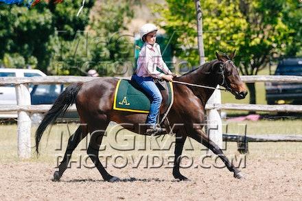 Working Stock Horse - Under 16 Years - RF2013