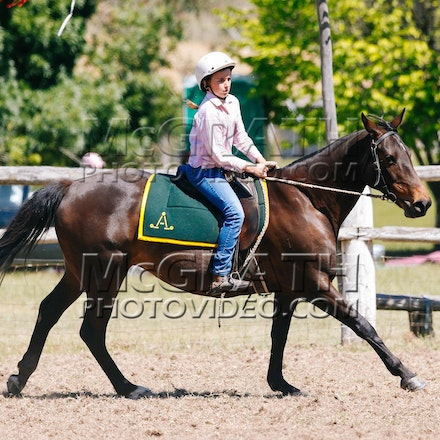 Working Stock Horse - Under 16 Years - RF2013