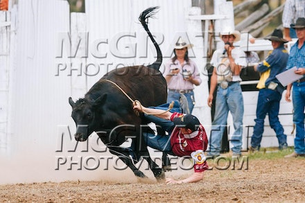 Bullock and Poddy Calf Ride - All ages