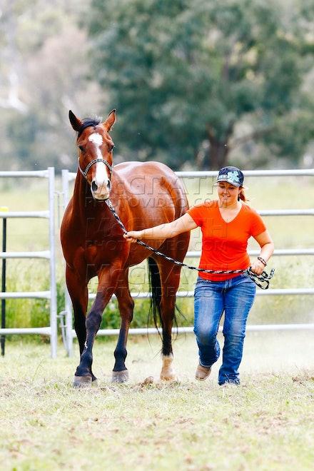 Led Stock Horse - 2014