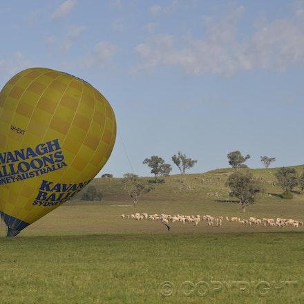 _DSC0368 - 2014 Australian Balloon Campionships, Canawindra, NSW