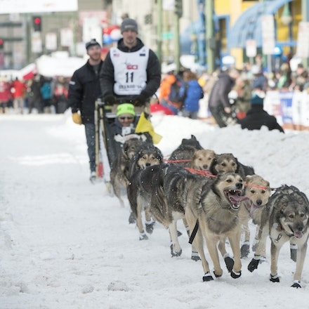 _PB19139 - 2016, March 5th. The Ceremonial start to the 2016 Itidarod, Dogsled race held in Anchorage. Dubbed as the Last Great Race. There was not enough...