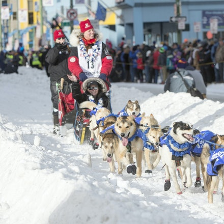 _PB19205 - 2016, March 5th. The Ceremonial start to the 2016 Itidarod, Dogsled race held in Anchorage. Dubbed as the Last Great Race. There was not enough...