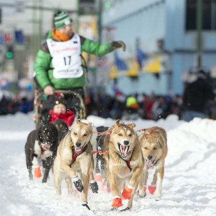_PB19363 - 2016, March 5th. The Ceremonial start to the 2016 Itidarod, Dogsled race held in Anchorage. Dubbed as the Last Great Race. There was not enough...