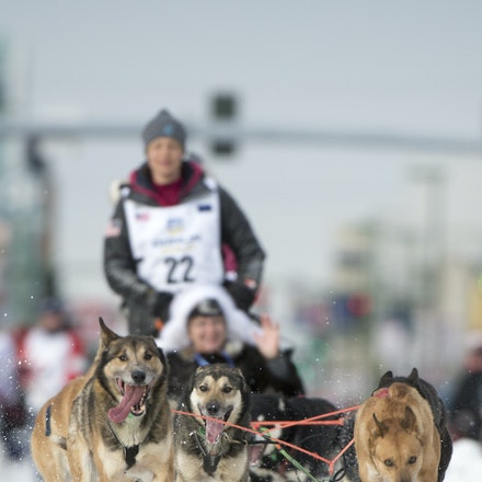 _PB19460 - 2016, March 5th. The Ceremonial start to the 2016 Itidarod, Dogsled race held in Anchorage. Dubbed as the Last Great Race. There was not enough...