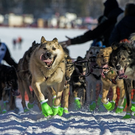 _PB11995 - 2016, March 6th. The start to the 2016 Itidarod, Dogsled race. Dubbed as the Last Great Race.  Mushers leave Willow for the start of the 1049...