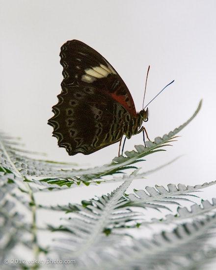 Butterfly_6129