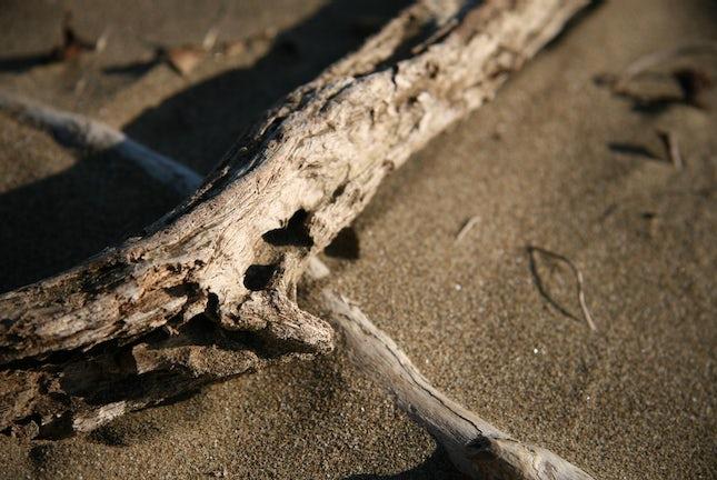 Driftwood... - Coolum, Queensland, Australia.