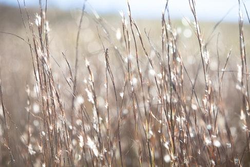Lost in the fields... - New England Tablelands, NSW, Australia.