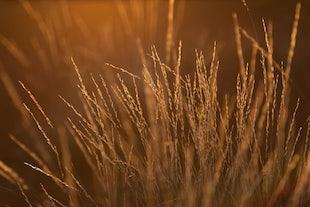 Nature -
