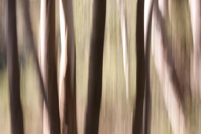 Pick up sticks... - Toowoomba, Australia.