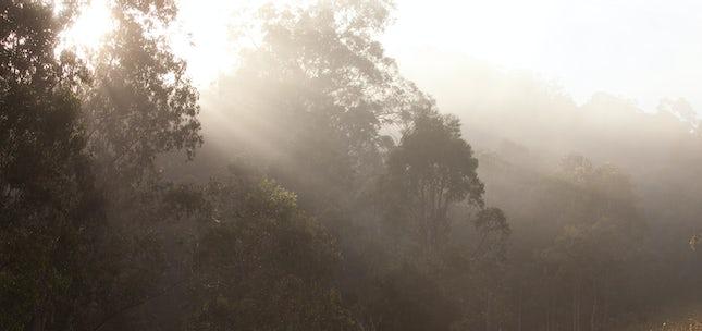 Misty mornings.. - New England Tablelands, NSW, Australia.
