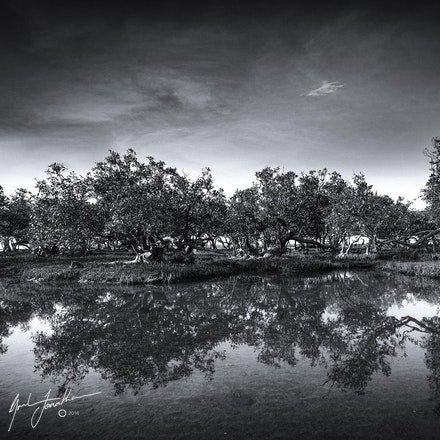Karratha Trees Reflection