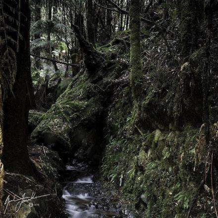 Tasmania Bush walk