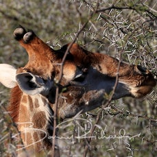 06 May - Day 18 - Oudtshoorn - Buffelsdrift Game Lodge Safari