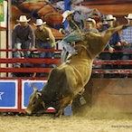 Australian Rodeos 2013