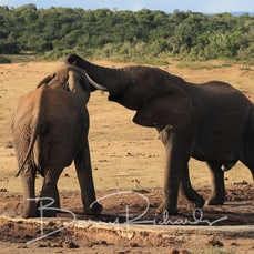 03 May Day 15 - Addo Elephant Park, Sth Africa