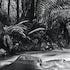 Spiritual Pool - Mountain stream ,Meander forest, Tasmania.